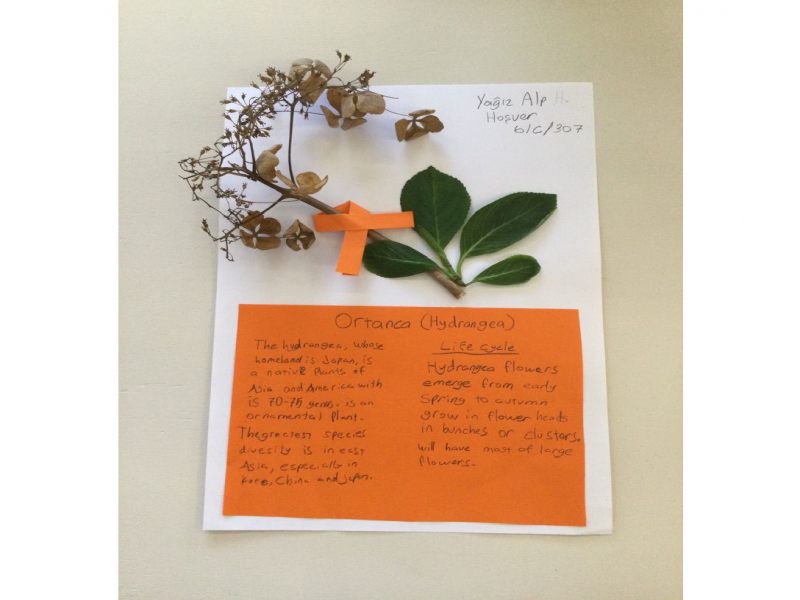 Dried plants collections they find with their names